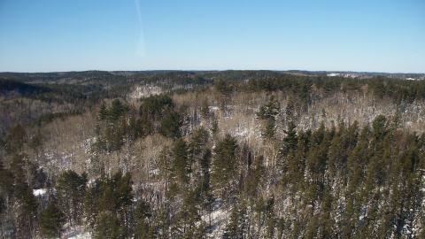 La forêt boréale à l'ouest de Sudbury