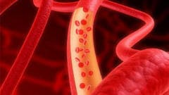 Des vaisseaux sanguins