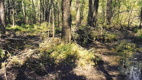 Exemple d'un milieu boisé à Laval