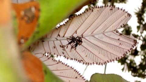 Des fourmis à la chasse