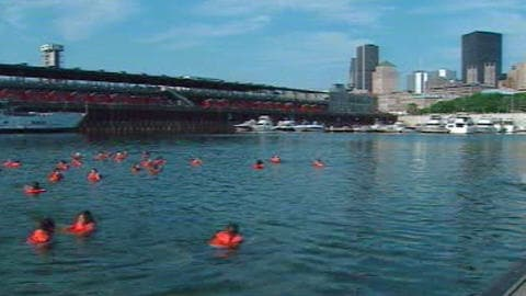 Des baigneurs dans le fleuve St-Laurent, à la hauteur du quai Jacques-Cartier, dans le Vieux-Port de Montréal