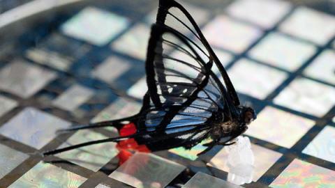 Un papillon sur une pellicule