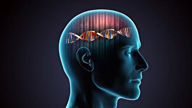 Génome humain ADN