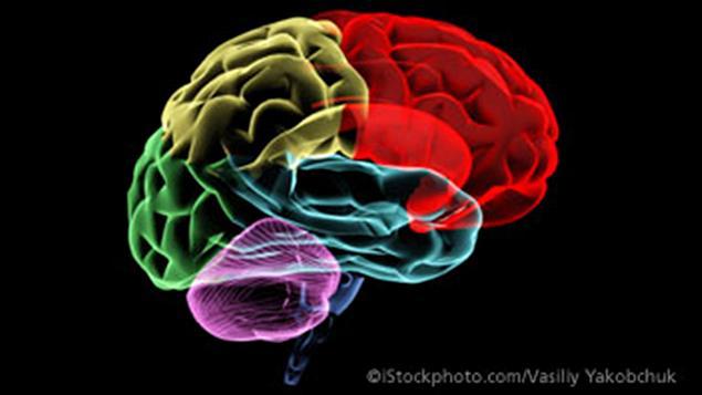 110222_c2o40_cerveau