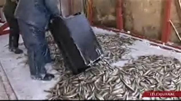 Pêche à l'éperlan