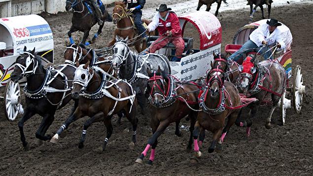 Course de chariots au Stampede de Calgary