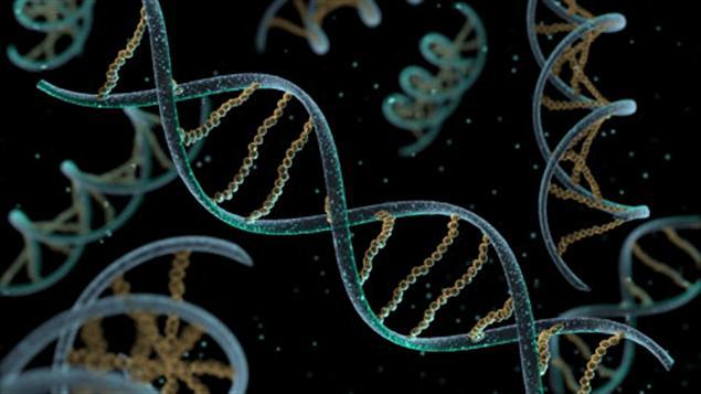 Une représentation d'ADN