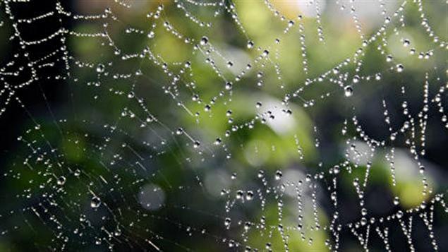 Une toile d'araignée
