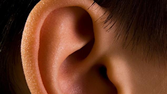 Gros plan d'une oreille