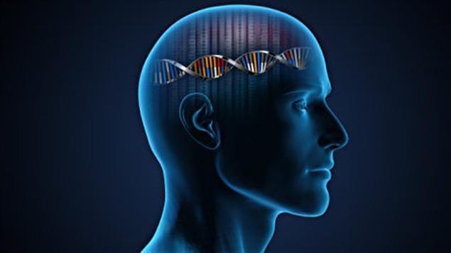 Impression artistique de l'ADN humain dans le cerveau