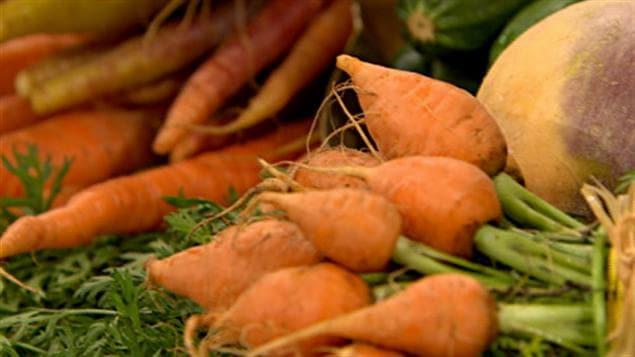Différentes variétés de carottes