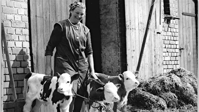 Une femme en 1982 entourée de trois petits veaux, dans une ferme.