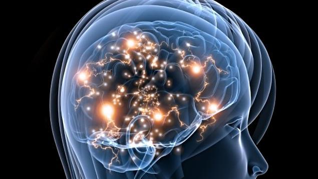Le cerveau d'une femme