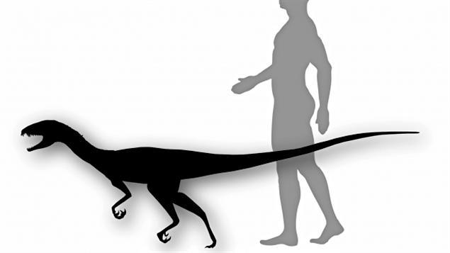 Daemonosaurus chauliodus