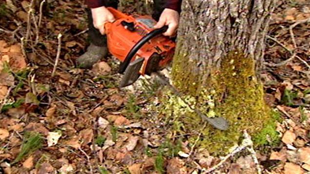 Coupe dans une forêt