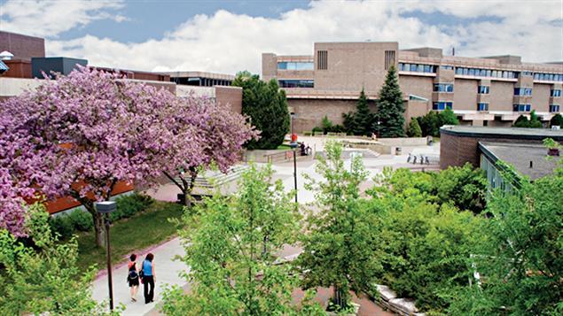Université Lakehead