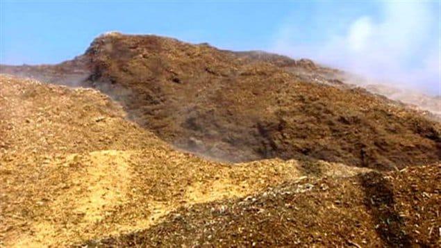 biomasse-forestiere