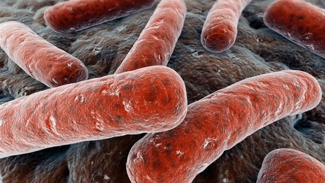 Des bactéries Escherichia coli