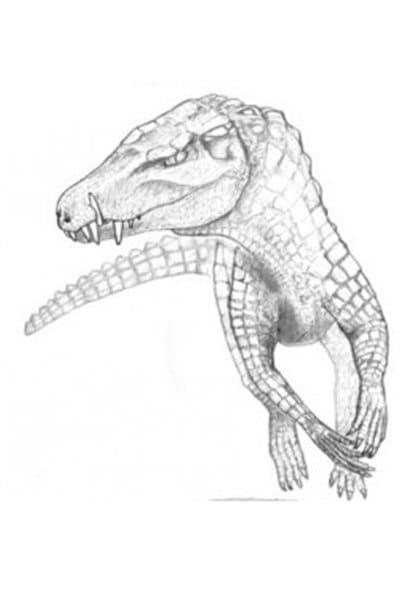 Croquis dessiné par le Pr Larsson illustrant comment cette espèce nous serait apparue en mouvement.