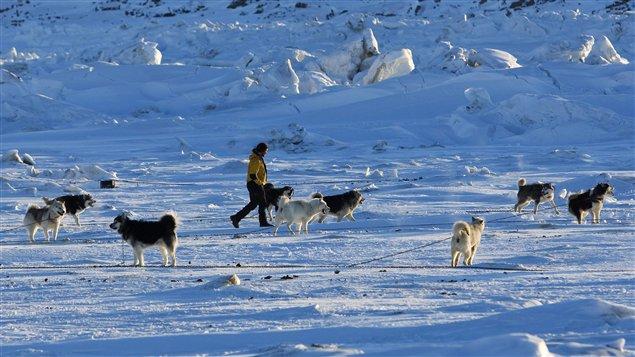Des chiens de traîneau (Archives)