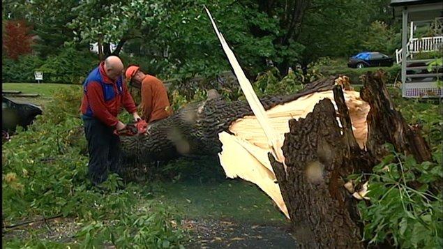 Un arbre tombé à Sherbrooke