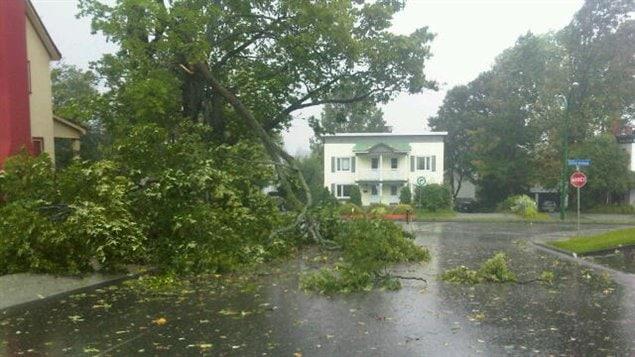 Des arbres ont été endommagés à Sherbrooke, comme ici, rue Walton.