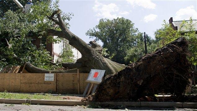 Un arbre déraciné par l'ouragan Irene à Washington