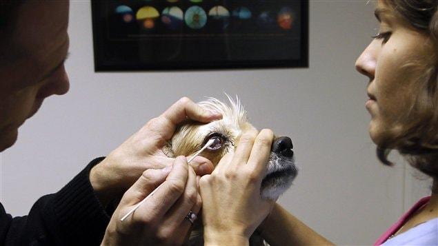 Chien soigné par un vétérinaire