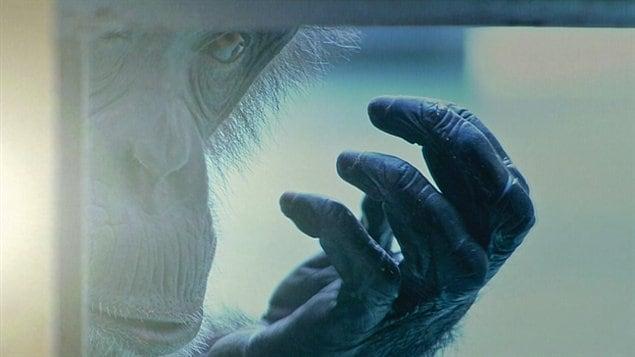 Le film Survivre au progrès prend l'affiche le 4 novembre prochain.
