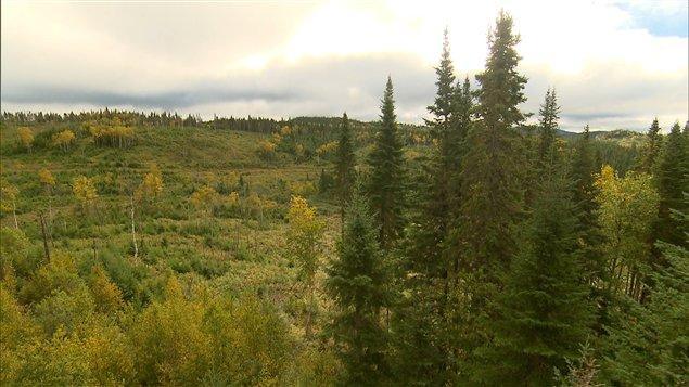 Les résidus de bois laissés après les coupes forestières constituent une manne pour certains.
