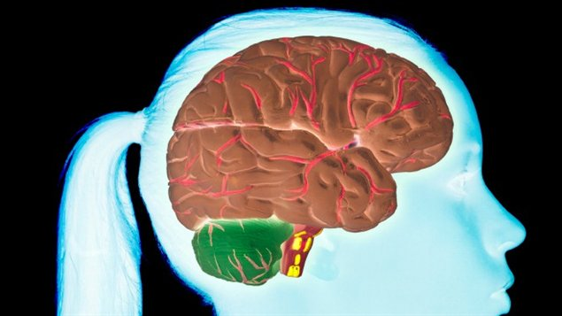 Le cerveau d'une adolescente