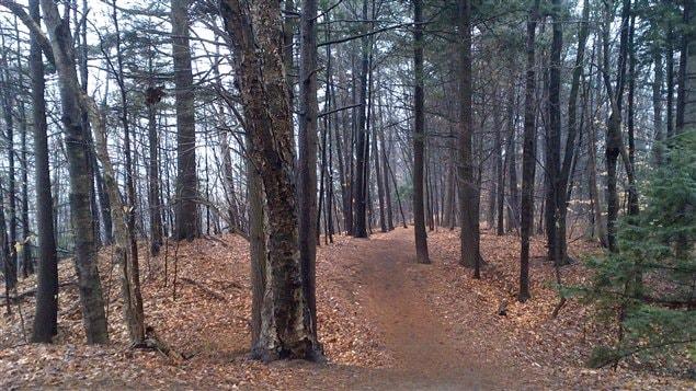 La forêt du Grand Coteau.