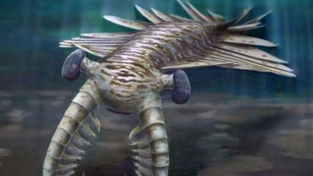 Une vue artistique de l'Anomalocaris, un vieux prédateur marin doté de bons yeux. Une vue artistique de l'Anomalocaris, un vieux prédateur marin doté de bons yeux. Une vue artistique de l'Anomalocaris