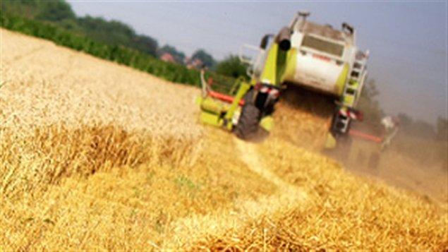 Commission canadienne du blé : fin du monopole?