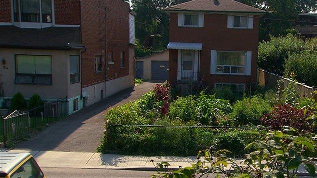Un jardin devant une maison de Toronto.
