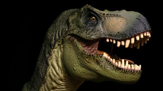 Représentation de la tête d'un  tyrannosaure