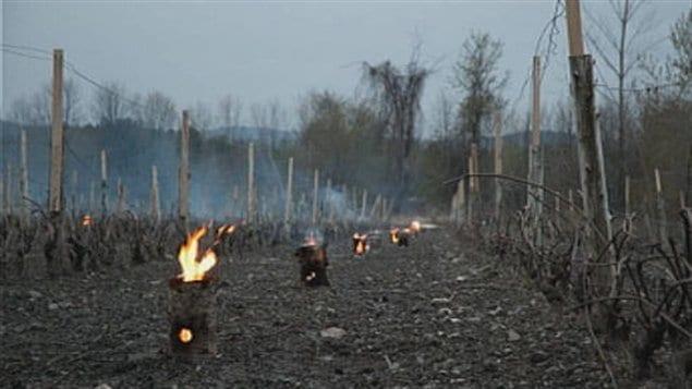 Des feux ont été allumés dans un vignoble de Saint-Armand.