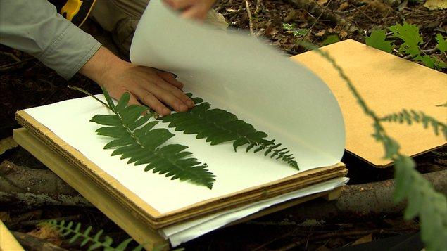 L'herbier Marie-Victorin est le quatrième en importance au Canada.