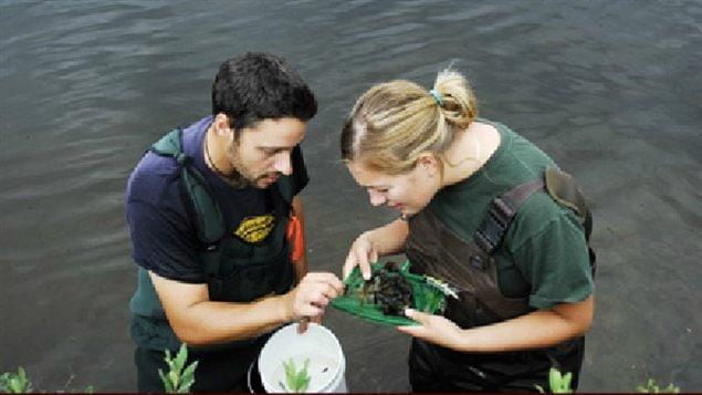 Deux scientifiques du programme de recherches dans la Région des lacs expérimentaux