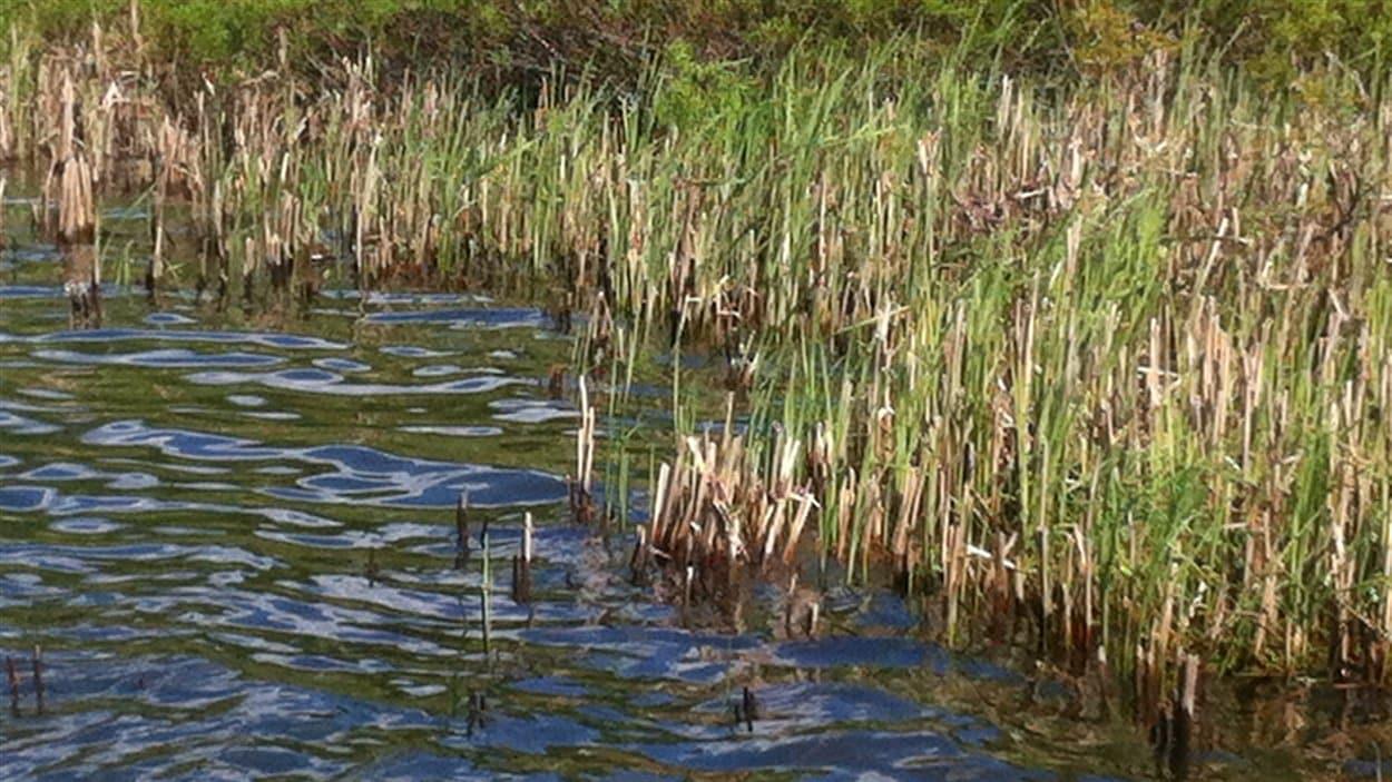 marais-lieux-humides
