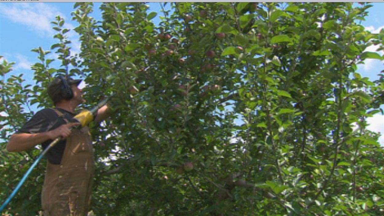 Un pommicultueur de Freligshburg propose des louer ses pommiers pour 75 $ par année.