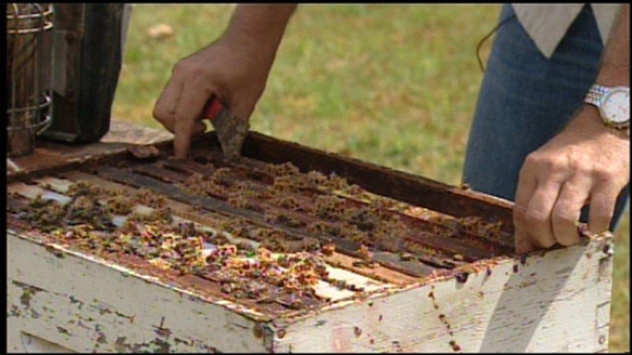 vol d'abeilles Abbotsford