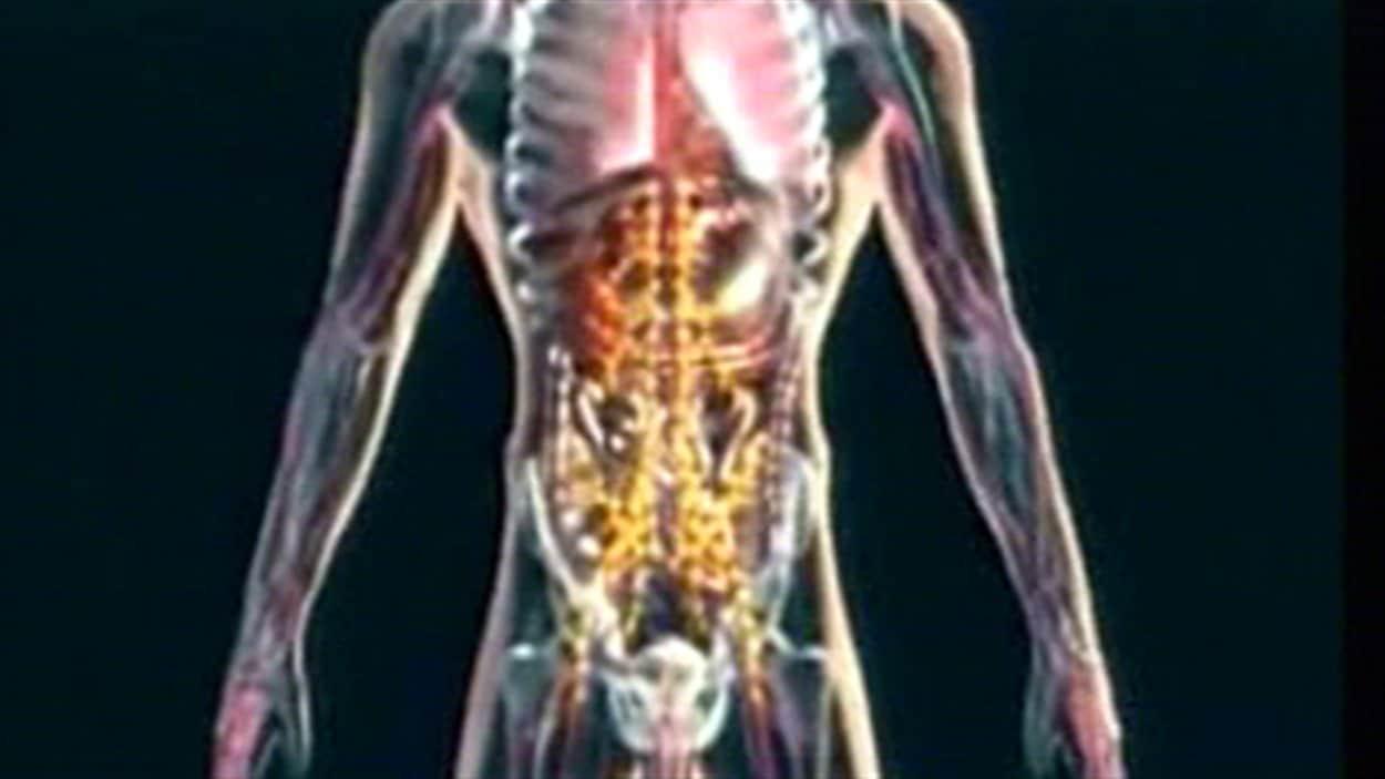 prostate-homme-anatomie