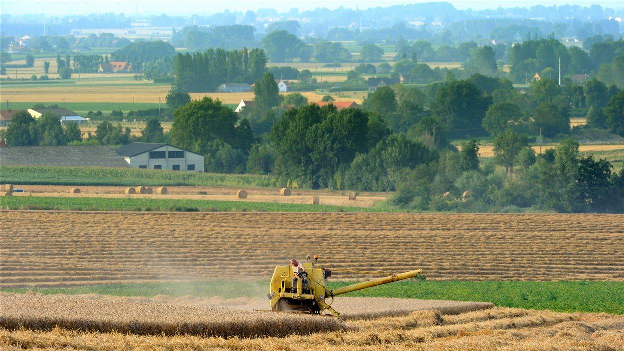 Des champs à Cassel, dans le nord de la France