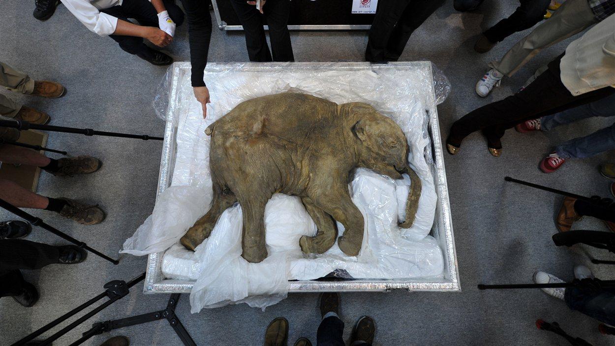 Les humains rêvent de ressusciter des animaux éteints depuis les progrès en génétique réalisés dans les années 1990.