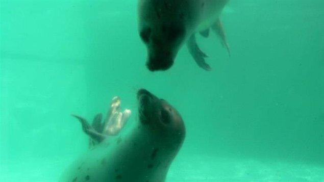 Les deux jeunes phoques, Zak et Mika