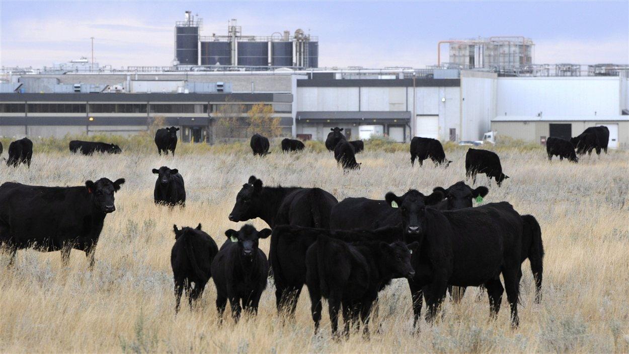 L'usine de XL Foods Inc, à Brooks, en Alberta