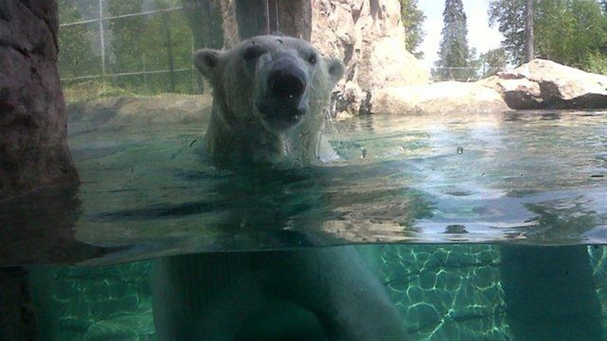 L'ours polaire Inukshuk à Cochrane