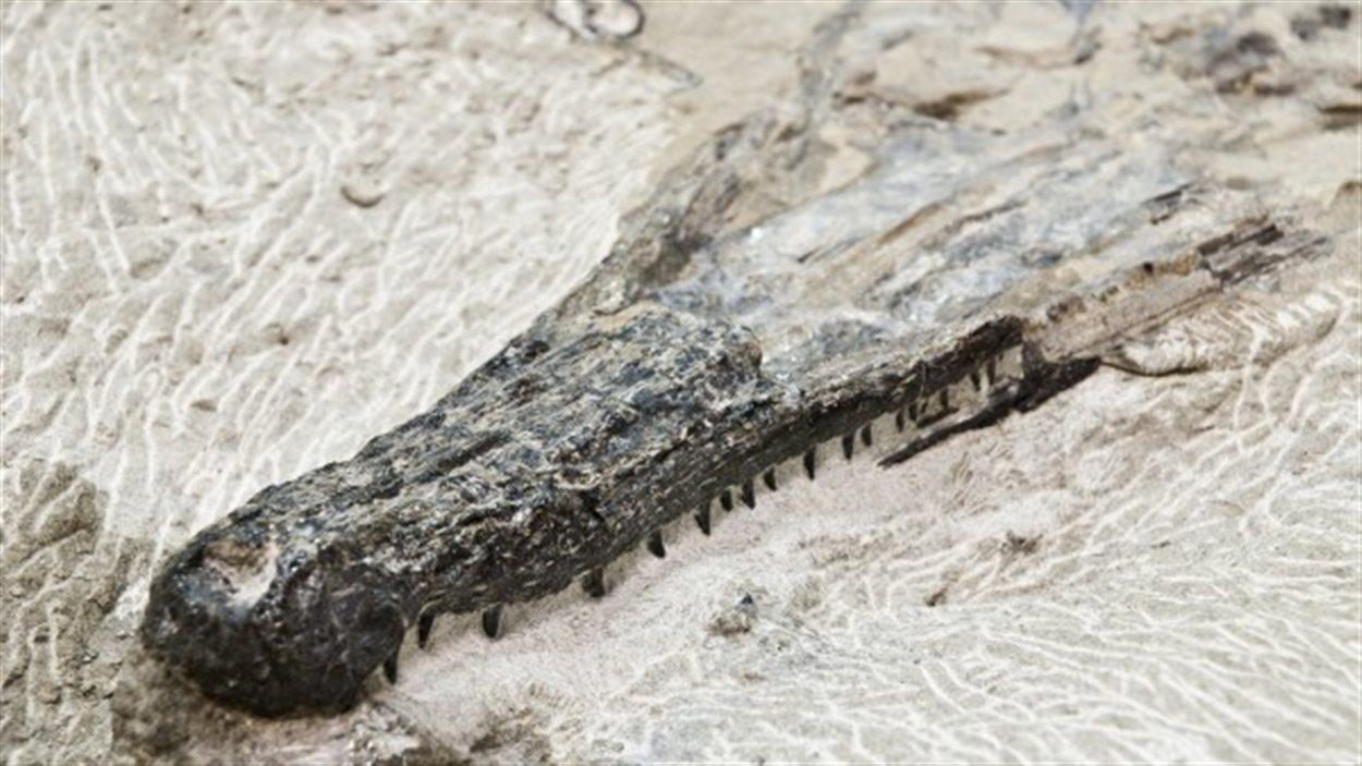 Le squelette découvert au collège Olds.