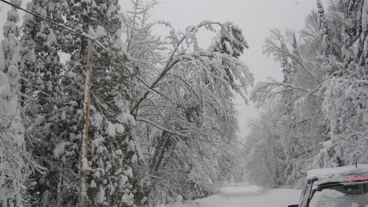 Des câbles sous le poids de la neige et des arbres